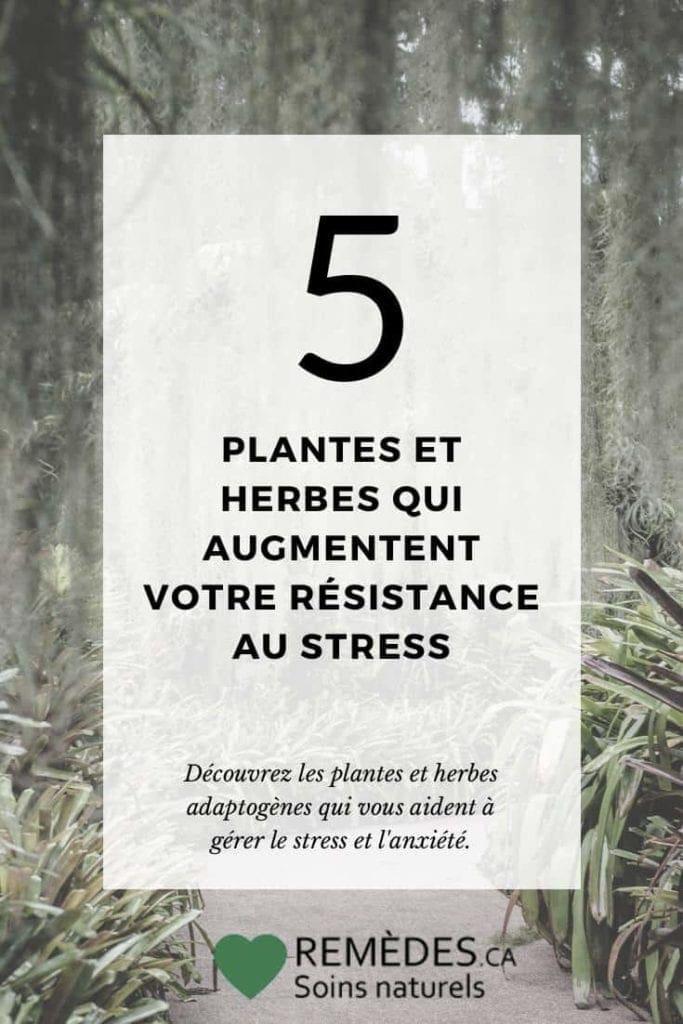 5 plantes et herbes adaptogènes pour réduire le stress