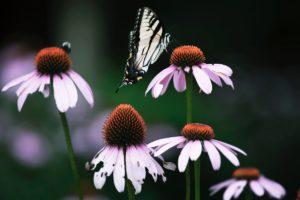 plantes contre les problèmes respiratoires
